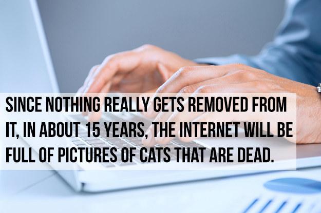 cats cat internet crazy egypt walls